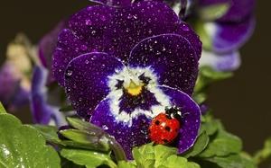 Правила посадки цветка