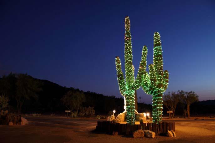 На Кубе кактусы используют в качестве ели на Новый Год