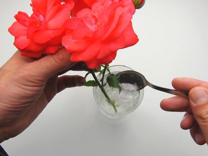 С целью поддерживания в цветочной композиции оптимального количества углеводов, в вазу с водой рекомендуется положить пару кусочков сахара