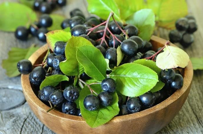 Употребление ягод аронии очень востребовано при лечении целого ряда заболеваний