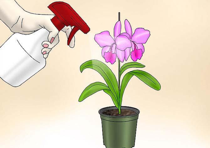 Когда цветок зацвёл, необходимо сменить режим его полива, что будет соответствовать естественной природе цветущего растения