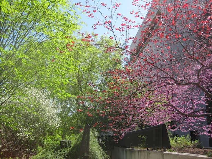 Впечатление, которое остается от сада, такое, что туристы должны не сомневаться в том, что растения выросли сами, без вмешательства человека