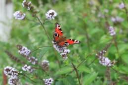 Знаете ли вы, что на каждом дачном участке, в саду и в огороде живут гномы, эльфы, духи цветов и сада?
