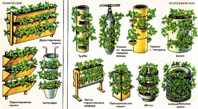 Вертикальный способ посадки клубники предпочтительнее, так как способствует значительной экономии места для размещения