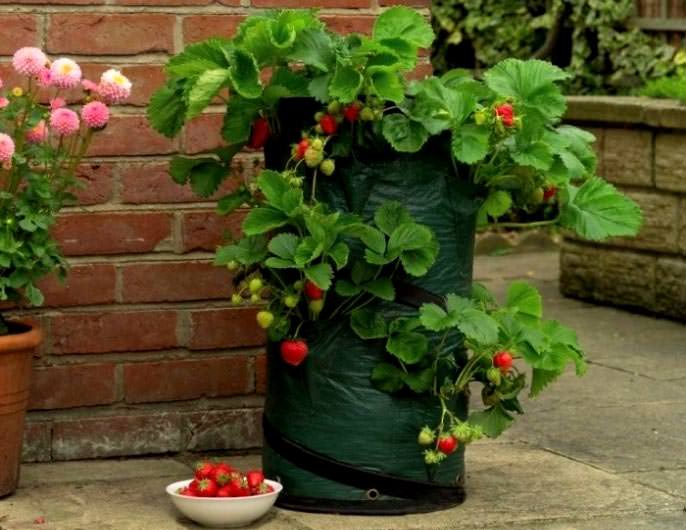 Ёмкости в виде полиэтиленовых мешков наиболее удобны, так как позволяют разметить растения не только горизонтально, но и вертикально