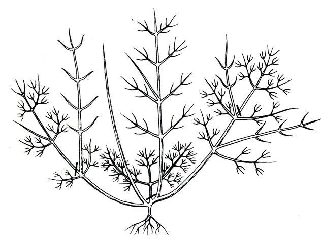 Ежегодная ранневесенняя обрезка кроны жимолости предполагает удаление не только сухих, но и обманных, ослабленных и слишком коротких побегов