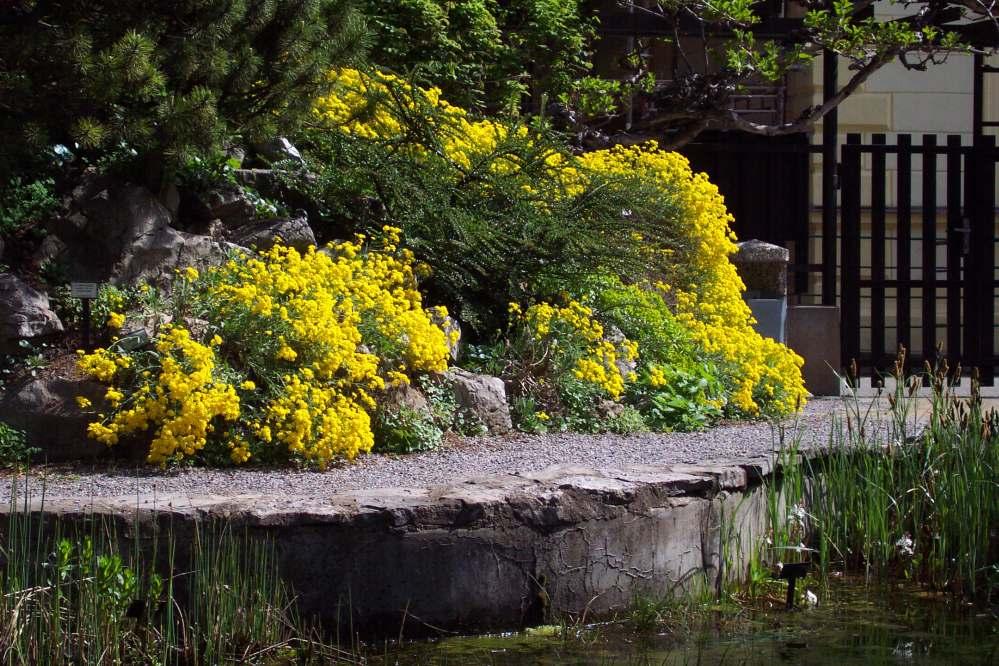 Многообразие приятных на вид меленьких цветочков, так еще и приведет за собой пчел и бабочек, присутствие которых даст цветнику возможность иметь образ настоящего дикого поля или луга