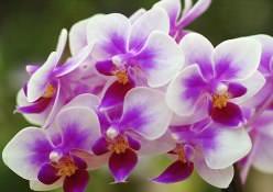 Комнатные орхидеи с каждым годом становятся популярнее