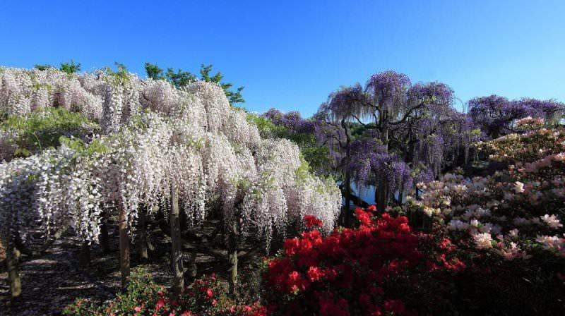 Стоит всего лишь раз увидеть «водопады» из белых, желтых, пурпурных, розовых, фиолетовых, голубых цветков, выделяющиеся на фоне яркой зелени, и вы не забудете этот момент никогда