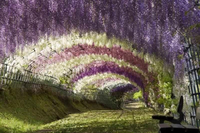 Несмотря на видовое разнообразие парка, многие путешественники садоводы и ландшафтные дизайнеры стремятся попасть сюда с целью увидеть парад глициний