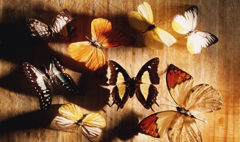 Возможно сделать эксклюзивные бабочки своими руками
