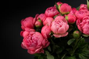 Бывает так, что внешне пионы выглядят здоровыми, но не цветут.