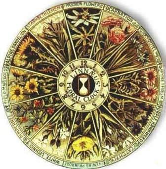 Описал принцип работы и создал первые цветочные часы знаменитый шведский ботаник Карл Линней