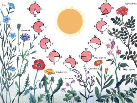 Можно создать неповторимую цветочную композицию и своими руками