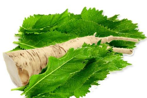 Хрен обыкновенный является очень полезным растением, поскольку обладает целебными свойствами