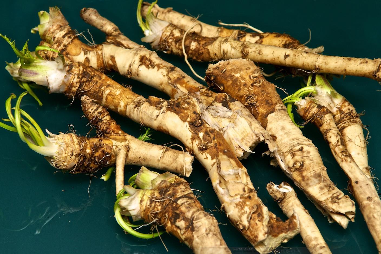 Сбор корней хрена необходимо проводить осенью или ранней весной