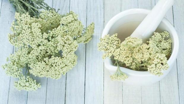 Благодаря своему богатому составу порезная трава широко используется в народной медицине