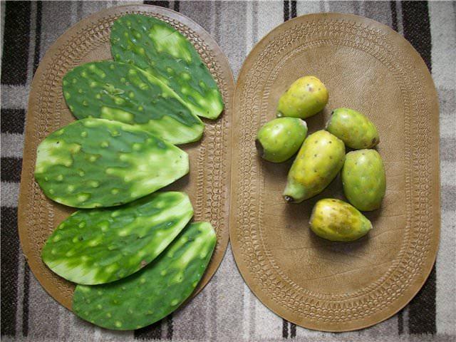 Стебли кактуса можно отваривать и запекать, а на Мальте из плодов этого растения изготавливают ликеры