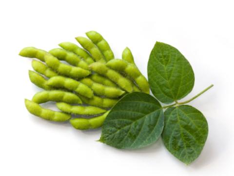 Соя – род растений из семейства Бобовых