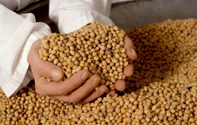 Многие вещества, содержащиеся в сое, необходимы для правильной работы человеческого организма