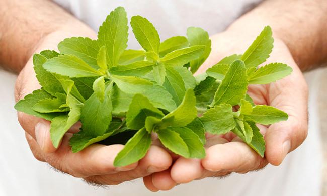 Благодаря витаминам и минеральным элементам, стевия незаменима для поддержания иммунитета