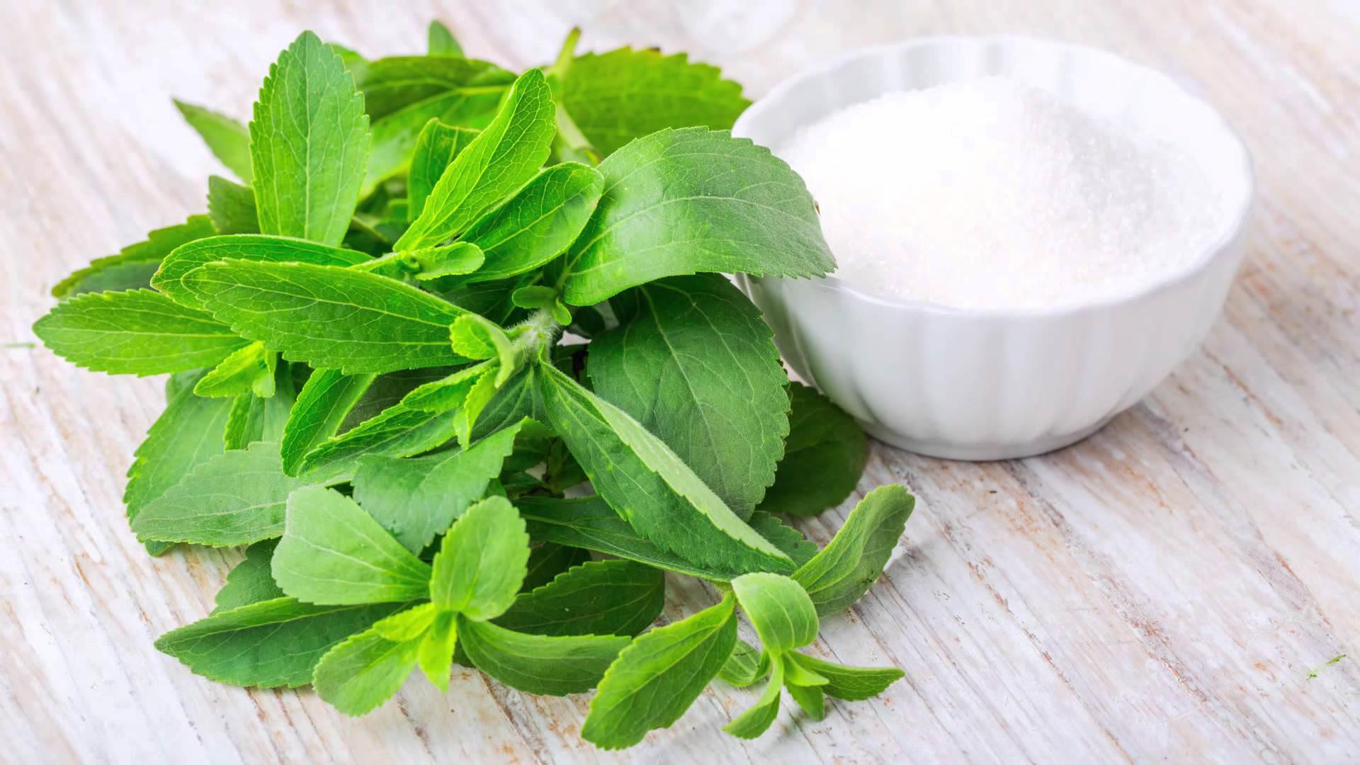 Сладкий двулистник – это самый полезный продукт из природных заменителей сахара, эффективный энергетический источник и лучшее терапевтическое средство