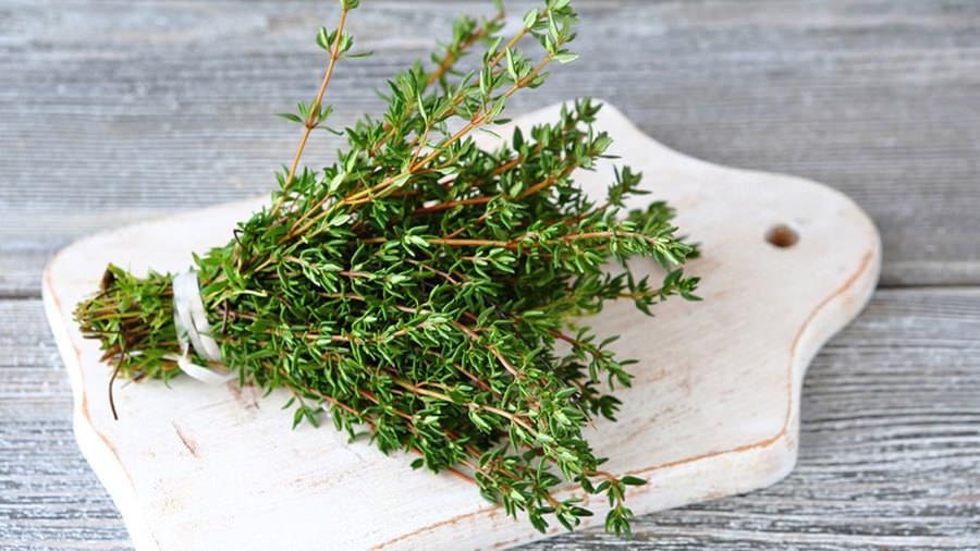 Трава чабрец содержит важные для человека витамины и минералы