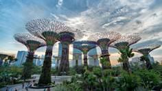 Уникальные сады будущего раскинулись на территории в Сингапуре