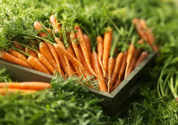 Есть несколько особенностей хранения моркови на зиму