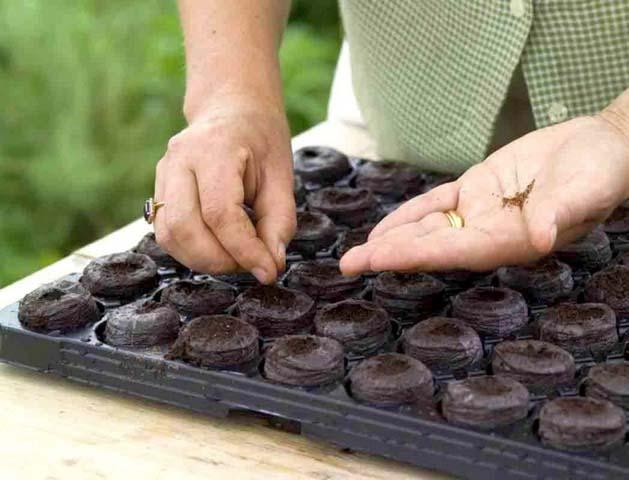 Будет лучше начать высаживать клубнику в феврале или марте месяце