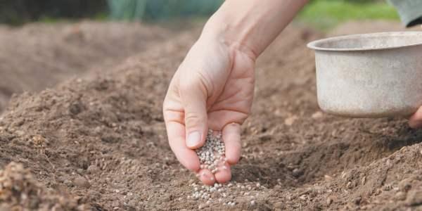 В весенний период сажать свёклу нужно только после прогрева грунта до оптимальных показателей