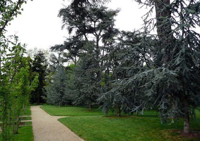 Пейзажи лесной части парка напоминают о родине Альбера Кана – французском Эльзасе и Вогезских горах