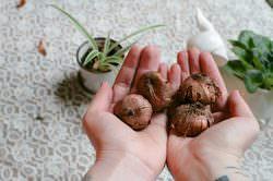Луковицы гладиолусов нужно максимально правильно подготовить к хранению