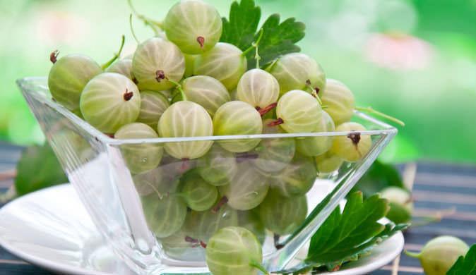 Полезные свойства плодов крыжовника не остались незамеченными косметологами