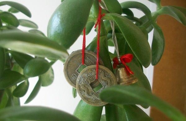 Совсем не лишним для привлечения богатства и денежных потоков в дом станет украшение цветочного горшка и выращиваемого комнатного растения блестящими китайскими монетками или ленточками и нитями красного окрашивания