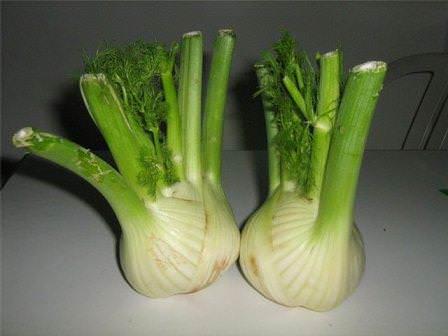 Некоторую опасность для фенхеля представляют полосатый и зонтичный клопы, зонтичная моль, кориандровый семяед, а также фомоз