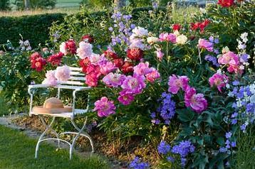 Цветники – неотъемлемый элемент дачного дизайна