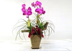 Уход за орхидеей в домашних условиях ведется согласно целому ряду правил