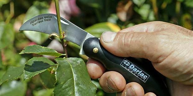 Для способа окулировки лучше всего использовать специальный окулировочный садовый нож
