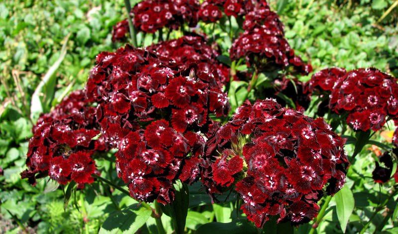 Прекрасные растения радуют очаровательным видом, манящим ароматом и сочностью окраски