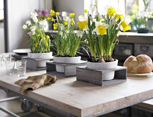 Правильно подобранные цветы для кухни во многом способствуют созданию атмосферы красоты и комфорта