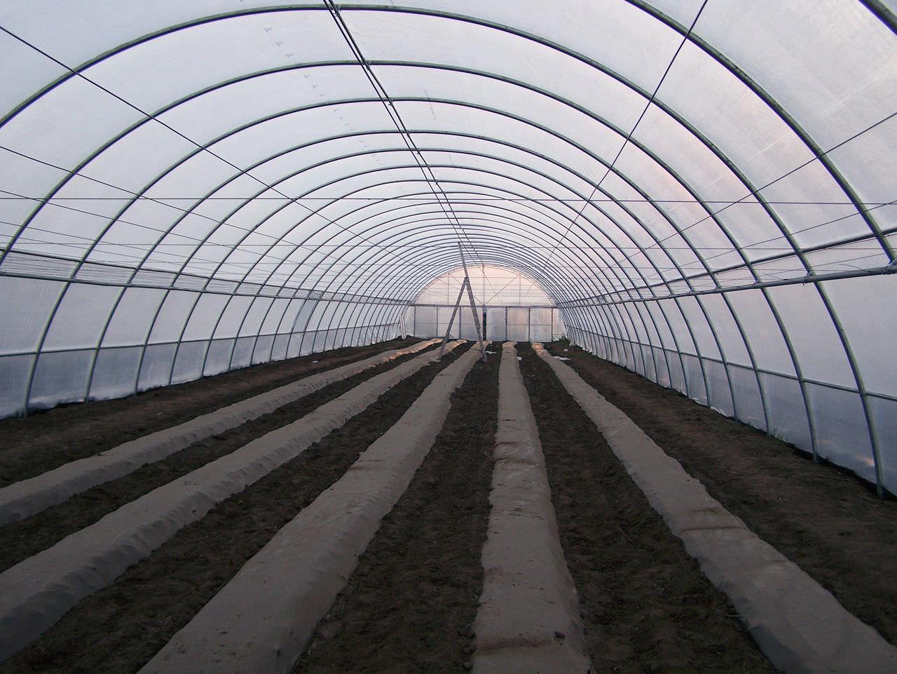Промышленная фермерская теплица предназначена для выращивания растительных культур в крупных объемах