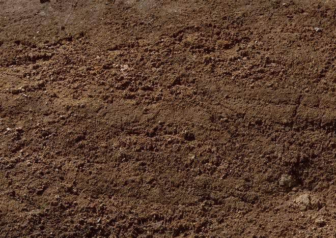 Самым бюджетным и оптимальным вариантом при выборе почвы является земля