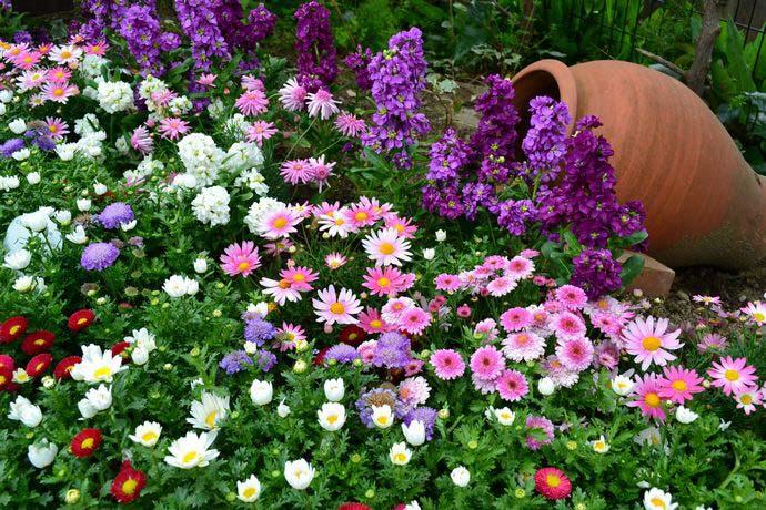 При заполнении цветника следует соблюдать принцип многоярусности