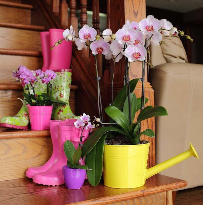 Полив орхидей в домашних условиях является важным условием для успешного выращивания растения