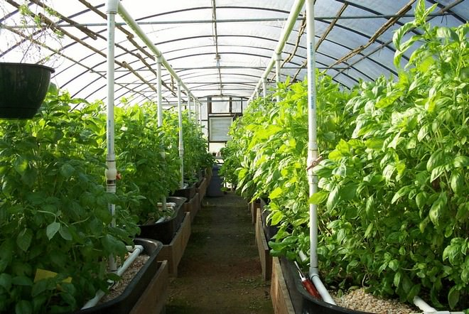 Эта конструкция предназначена для круглогодичного выращивания ягод, овощей и прочих растительных культур
