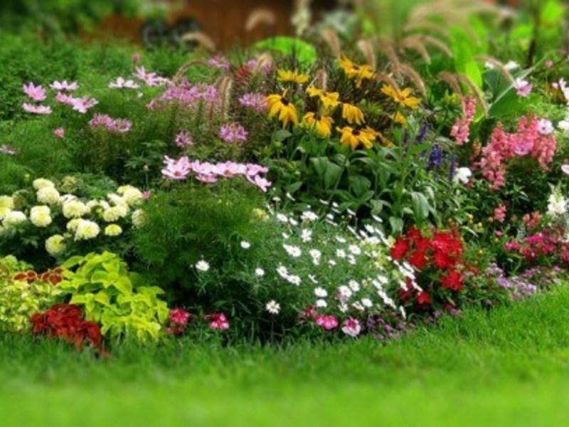 Какие многолетние цветы выбрать
