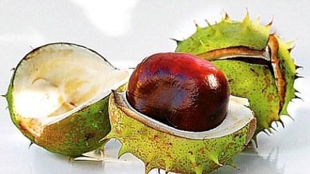Осенью у каштана появляются плоды, отличающиеся своей самобытностью за счёт зеленых иголок. Позднее они падают и разламываются, так появляются необычные семена дерева