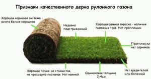 Какой должен быть рулонный газон