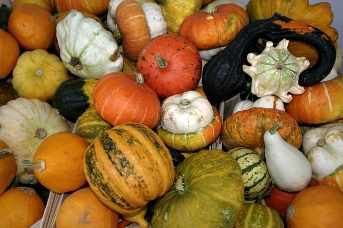 Каждый сорт тыквы характеризуется своими показателями, характерными для стадии полноценной спелости